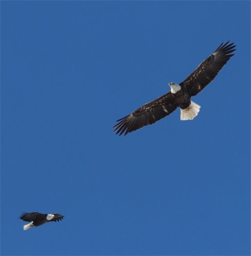 Eagles over Batavia