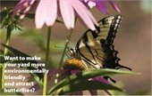 Want to make your yard more environmentally friendly and attract butterflies?