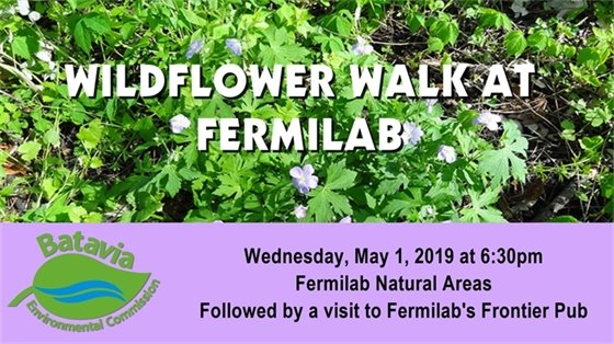 Wildflower Walk at Fermilab on May 1, 2019 at 6:30 p.m.